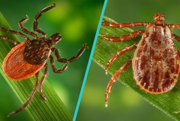 How to Co-exist with Wisconsin's Ticks